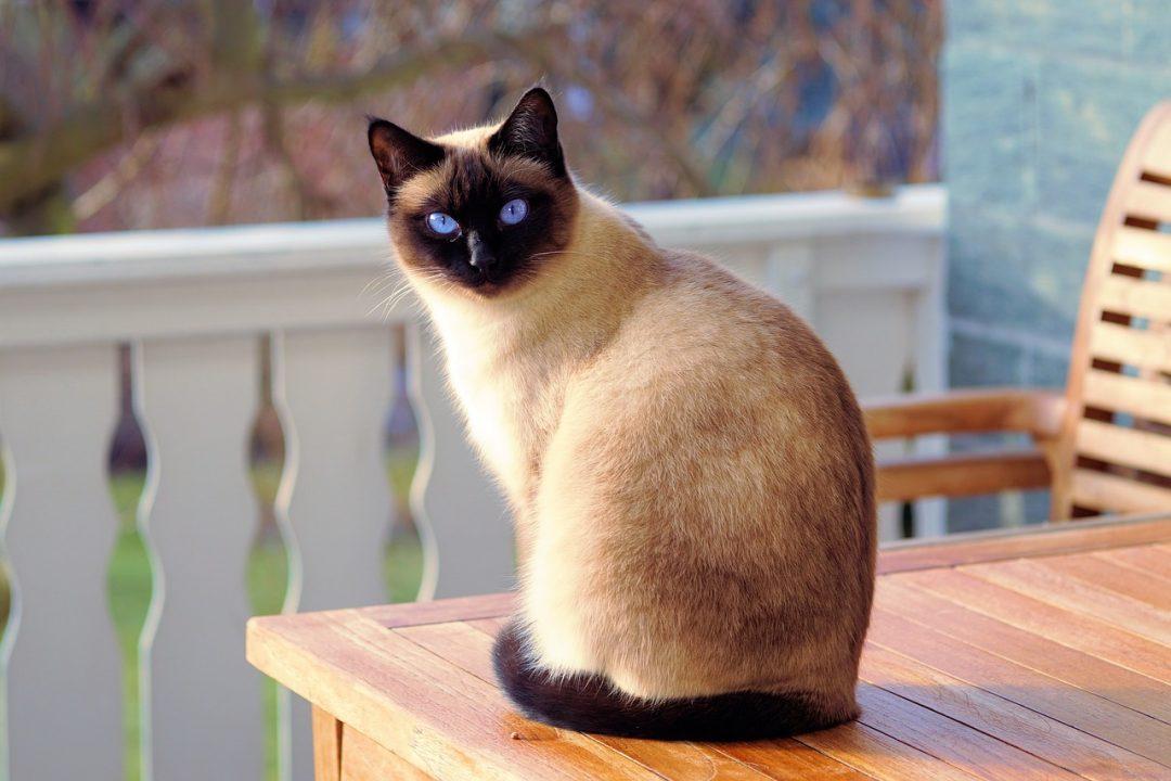 cat-2068462_1280-1080×720